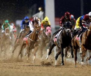 سباقات الخيول في دول الخليج